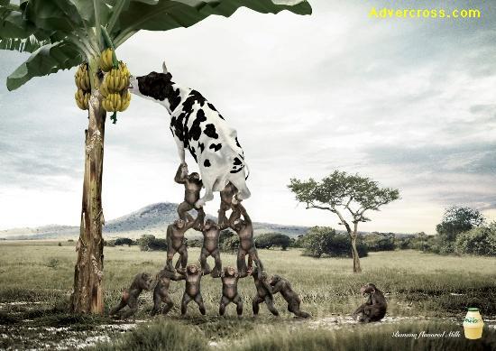 تبلیغ شیر با اسانس موز
